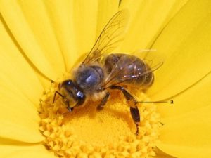 bee_pd_foto_explained1
